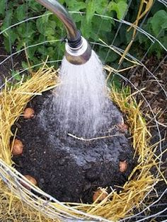 Make your own potato tower - no digging up potatoes! yields about 25 lbs/tower. Make your own potato tower - no digging up potatoes! yields about 25 lbs/tower. Small Gardens, Outdoor Gardens, Vertical Gardens, Outdoor Art, Container Gardening, Gardening Tips, Vegetable Gardening, Urban Gardening, Organic Gardening