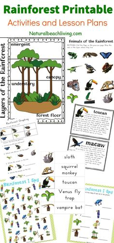The Best Rainforest Printable Activities for Kids