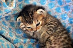 As fotografias transbordando fofura de gatinhos de Zoran Milutinovic