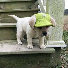 Puppy Hats. You have to have them right?