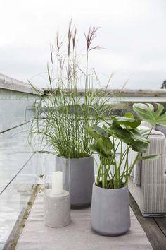 Grønn glede på terrassen.