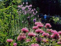 Gardening For Wildlife. Attract birds, butterflies and small mammals