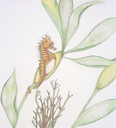 A fun collection of animals that live in the water. Short-headed Seahorse and Friends by Rene' COMER on Etsy