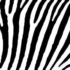 Zebra Lines zebra, white, black, background, vector, striped, pattern, line, design, animal, illustration, abstract, texture, print, nature, decoration, wild, graphic, wildlife, art, zoo, stripes, wallpaper, fashion, monochrome, lines, skin, africa, curve, safari, wavy, ornament, fauna, african, style, fabric, simple, natural, fur, surface, stripe, textile, material, modern, jungle, mammal, beautiful, detail, draw, wave