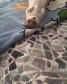 Hey hey,Funny, , Funny Categories Fuunyy Hey hey Source by Jantoes. Funny Cute Cats, Cute Cats And Kittens, Cute Funny Animals, Baby Cats, I Love Cats, Kittens Cutest, Beautiful Cats, Animals Beautiful, Cute Animal Videos