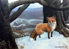 A little red fox stands alert in the winter snow with an old farm at his back in this Jerry Gadamus print.