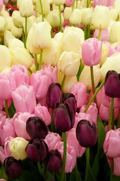 Things I Love About: Tulips