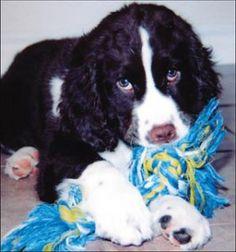 Los mejores juguetes para un cachorro