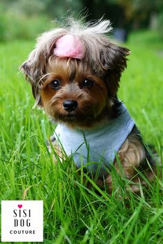 https://flic.kr/p/VEfHVN | 6,sisi dog couture, dog clothes pet clothing, pet supplies, dog hoodie, cothes for dog, ubranko dla psa, 5 | x-default