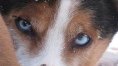Husky dog -Rovaniemi, Lapland, Finland
