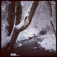 snow covered banks of a stream by Horn Pond. Woburn, MA.