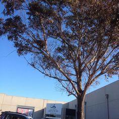 #birdsnest #destinationwarrnambool #Victoria #gatewayplaza  by maricar455