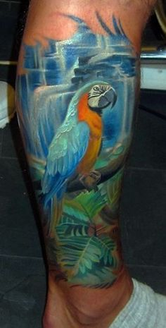 Beauty Blue & Gold Macaw