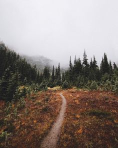 Autumn in the North Cascades (Washington) by Andrew Kearns ( Beautiful World, Beautiful Places, Wonderful Places, Surf, Misty Forest, The Great Outdoors, Mother Nature, Nature Nature, Illustrations