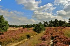 Second best hike!! Great walk for hikers who love beautiful mixed forest with stately beech avenues, heathland and dunes.