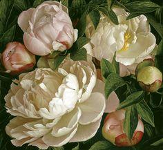 ~ Mia Tarney - Peony Gardenia, 2007, oil on linen