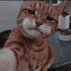 Funny Cute Cats, Cute Baby Cats, Cute Cats And Dogs, Cute Little Animals, Cute Funny Animals, Kittens Cutest, Cats And Kittens, Cute Cat Wallpaper, Most Beautiful Animals