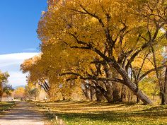 Best Fall Trip: Drive Enchanted Circle Scenic Drive in Taos, New Mexico during Autumn [Photo by Terry Thompson/Alamy]