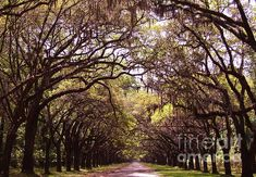 Road of Trees by Andrea Anderegg