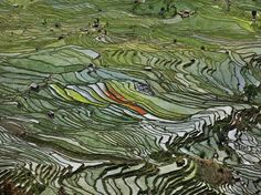 Showing an effect reminiscent of stained-glass windows, this aerial shot features rice terraces in the Western Yunan Province of China, one of the worlds largest rice-producing areas. Using an ancient strategy, farmers grow rice on terraced paddy fields, which decrease erosion and surface runoff and are more efficient for growing crops that require abundant water.