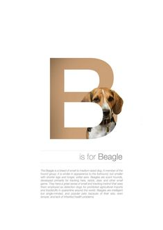 The Dog Alphabet – Fubiz Media