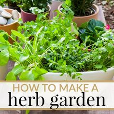 Whether you want to grow a herb garden in your yard or in the house, here are some tips on HOW TO MAKE YOUR OWN HERB GARDEN!