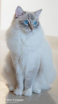 Cat photography made easy - Tips and tricks in a great tutorial Tap the link for an awesome selection cat and kitten products for your feline companion!