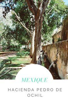 L'hacienda San Pedro de Ochil : Au carrefour d'Uxmal et des cénotés San Pedro, Occasion, Memories, Places, Haciendas, Mexico, Travel, Remember This, Lugares