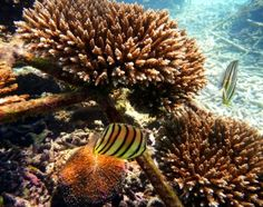 Coral and marine life, Koh Tao
