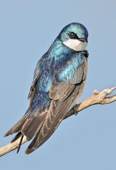 Most Beautiful Birds, Pretty Birds, Animals Beautiful, Cute Animals, Beautiful Creatures, Rare Birds, Exotic Birds, Tropical Birds, Colorful Birds