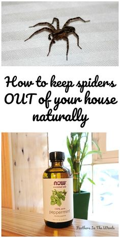 How to keep spiders out of the house naturally
