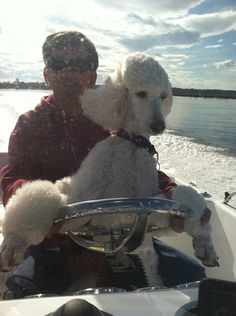 Standard poodle fun. Barnaby used to love my boat on Cape Cod.
