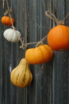 Easy DIY Pumpkin Garland --> http://www.hgtvgardens.com/decorating/pumpkin-decorating-ideas-no-carve-options?s=7&?soc=pinterest