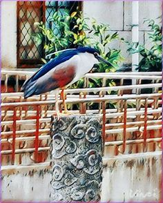 """# lowDpi image ..💝 Lovely # NightHeron 🐦~"""" # Hero #Heron 🎨🌈 @Vinci.cam ~ x 41*+%+Sizes Trendy Filters for quick photo Editing using Artificial Intelligence. #Vinci #Art175Now #VinciApp #VinciEffects #Vinci_Show"""