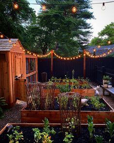 Garden Cottage, Veg Garden, Garden Trellis, Home And Garden, Backyard Patio, Backyard Landscaping, Outdoor Plants, Outdoor Gardens, Greenhouse Gardening