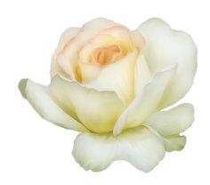 adika_flower_symphony_el (37).png