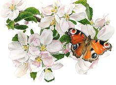 Botanical Art - By Anna Mason