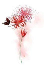 Hoa Bỉ Ngạn (Mạn Châu Sa Hoa)