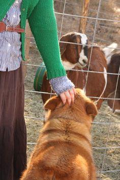 A blog on homesteading