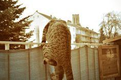 Kaninchenfan Lucky - Mein Kaninchenloch: Schnuckis Girlfriend is calling him hehe ♡  he talks to her a while this morning ^_~  #cats #katzen #stubentiger  http://kaninchenfanlucky-meinkaninchenloch.blogspot.de/2014/04/schnuckis-girlfriend-is-calling-him.html