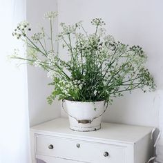 Cow parsley  Countryside Cow Parsley, Countryside, Vase, Instagram, Home Decor, Reciprocating Saw Blades, Flower Vases, Interior Design, Home Interiors