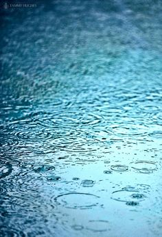 Let us know, Let us pursue the knowledge of the Lord. His going forth is established as the morning; He will come to us like the rain.  Hosea 6:3