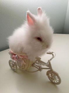 Baby bunny riding his bike