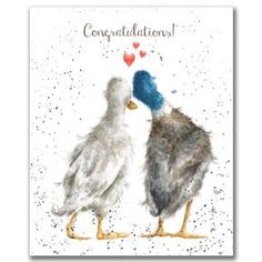 Congratulations Card - Duck Love by Hannah Dale Greeting Card Watercolor Bird, Watercolor Animals, Watercolor Paintings, Watercolours, Duck Drawing, Duck Art, Different Forms Of Art, Wrendale Designs, Engagement Cards