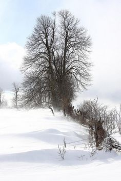 Snow with trees
