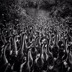 Winning Images of the 2016 iPhone Photography Awards #inspiration #photography