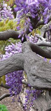Smith Gardens, Wisteria, Garden Sculpture, Eco Friendly, Garden Design, Mary, Events, Outdoor Decor, Green