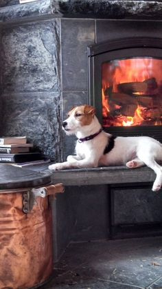 / Oh Soo Cozy. Taz warming himself by the fire.