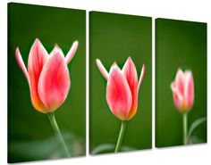 Foto schilderij Roze Tulpen op canvas (drieluik)