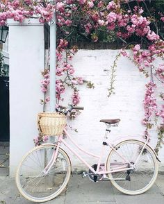 Bicycle in full bloom. x